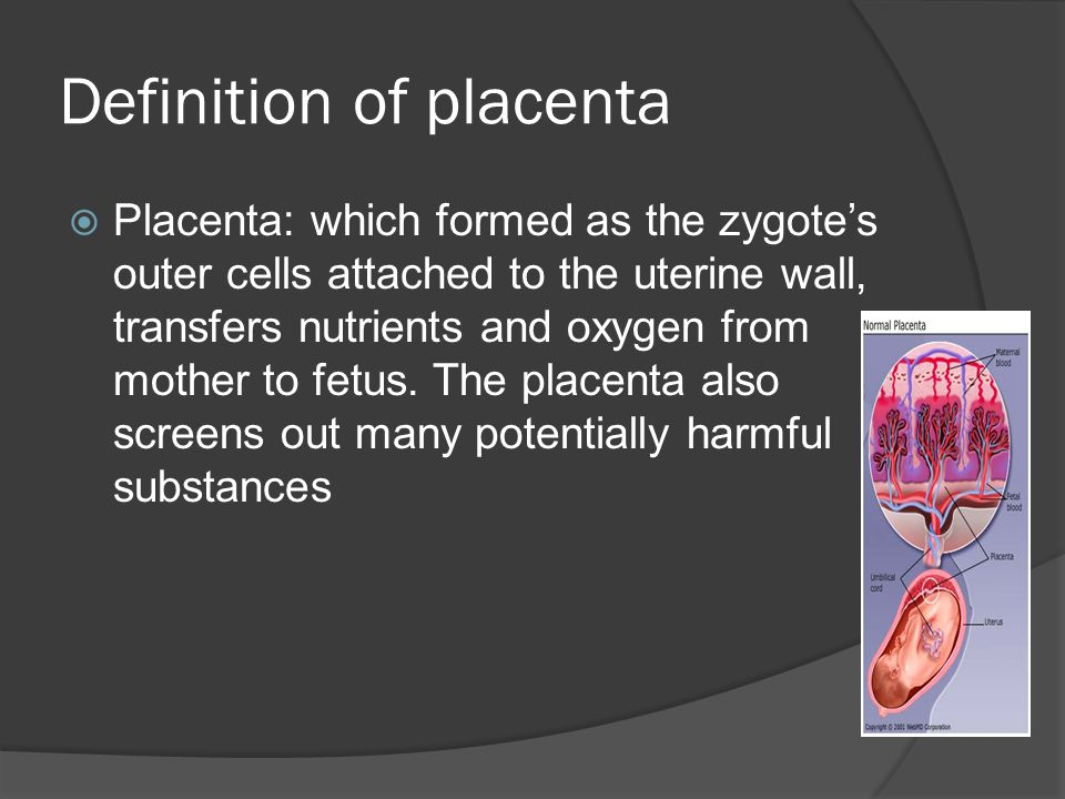 Definition of placenta