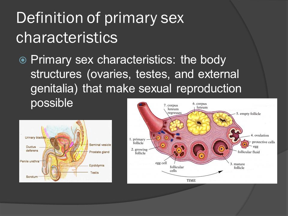 Definition of primary sex characteristics