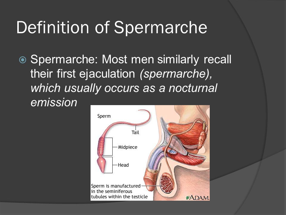 Definition of Spermarche