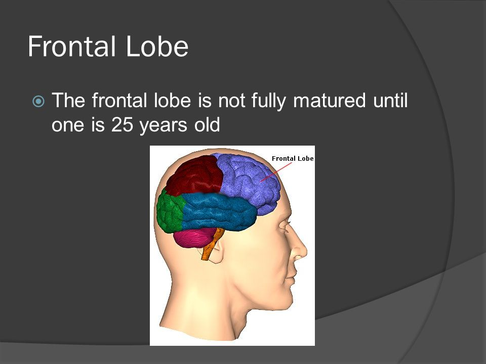 Frontal Lobe The frontal lobe is not fully matured until one is 25 years old