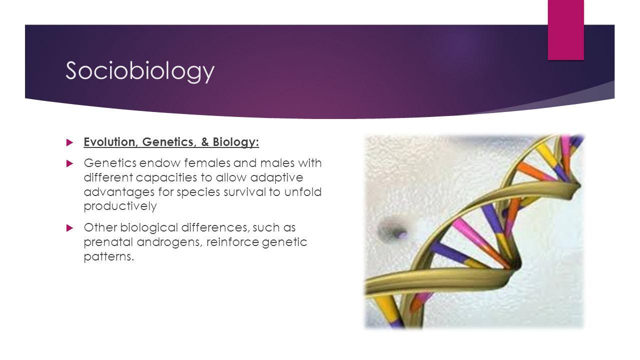 Sociobiology Evolution, Genetics, & Biology: