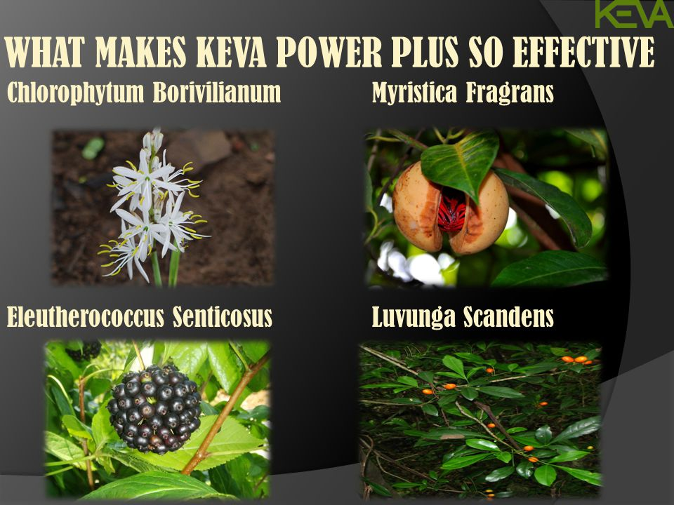 WHAT MAKES KEVA POWER PLUS SO EFFECTIVE