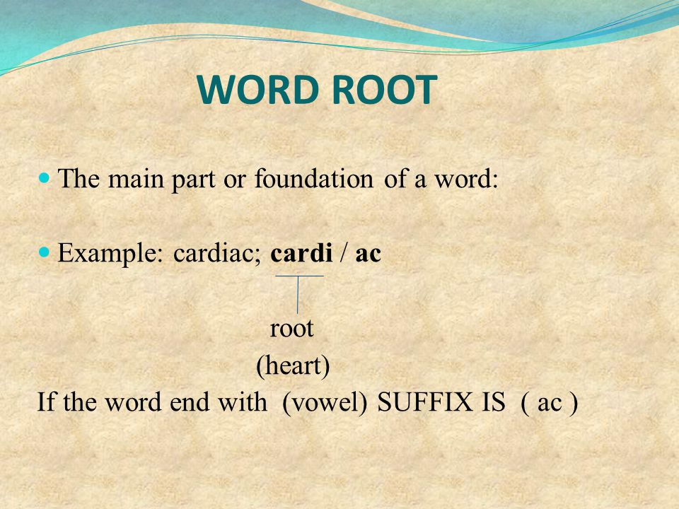 WORD ROOT The main part or foundation of a word: