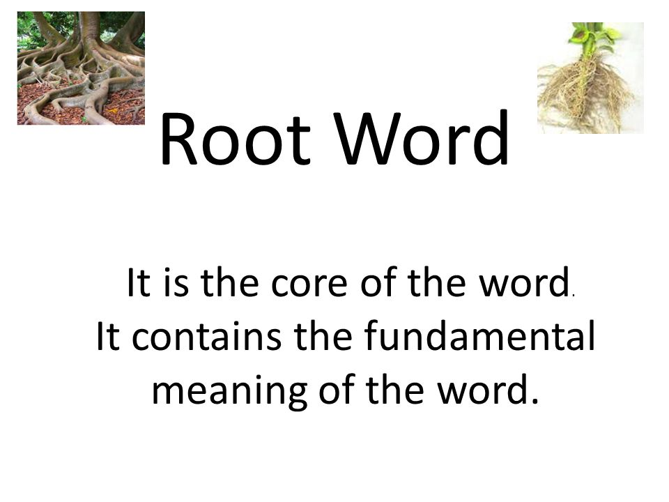 Root Word It is the core of the word.