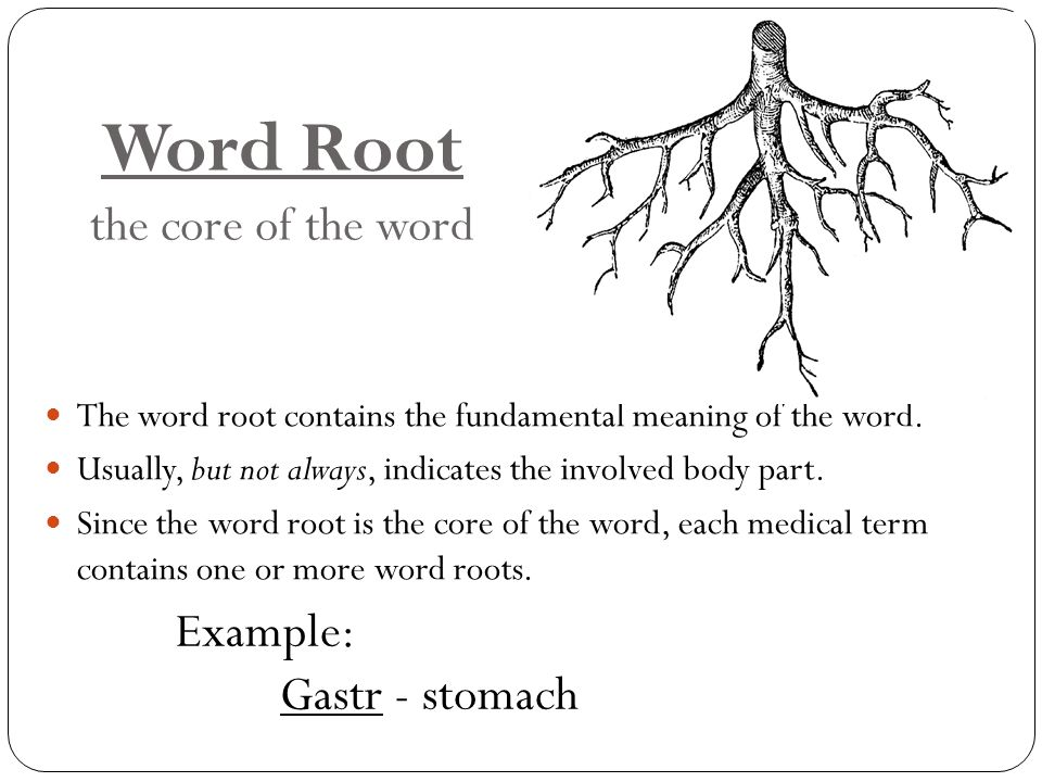 Word Root the core of the word