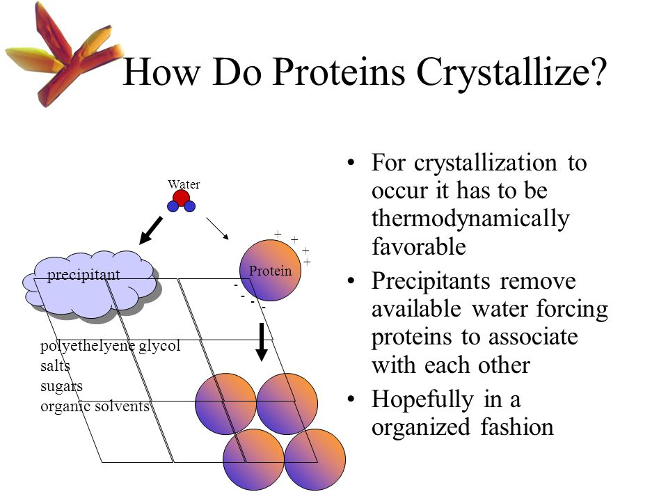 How Do Proteins Crystallize