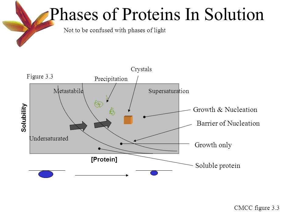 Phases of Proteins In Solution