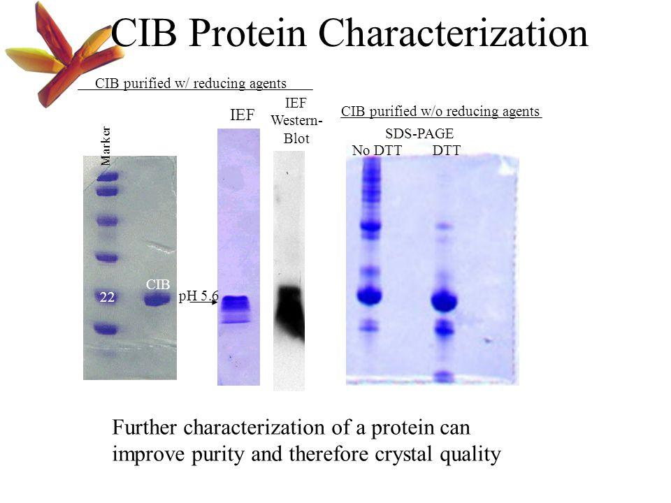 CIB Protein Characterization