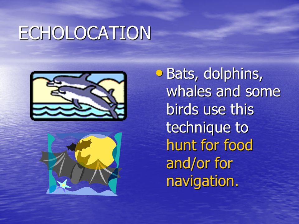ECHOLOCATION Bats, dolphins, whales and some birds use this technique to hunt for food and/or for navigation.