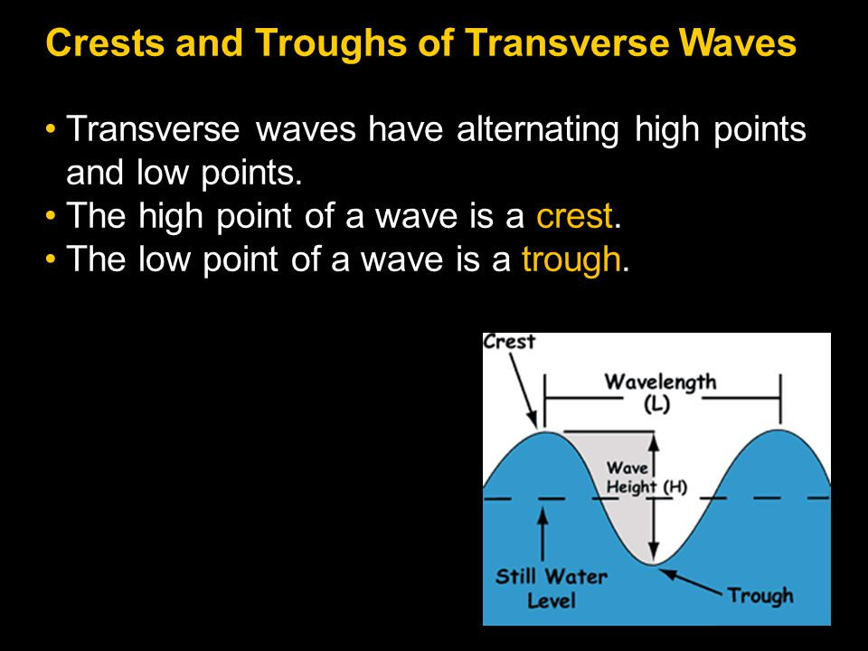 Crests and Troughs of Transverse Waves