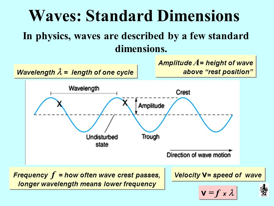Waves: Standard Dimensions