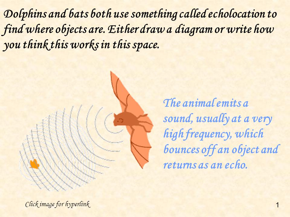 Dolphins and bats both use something called echolocation to find where objects are. Either draw a diagram or write how you think this works in this space.