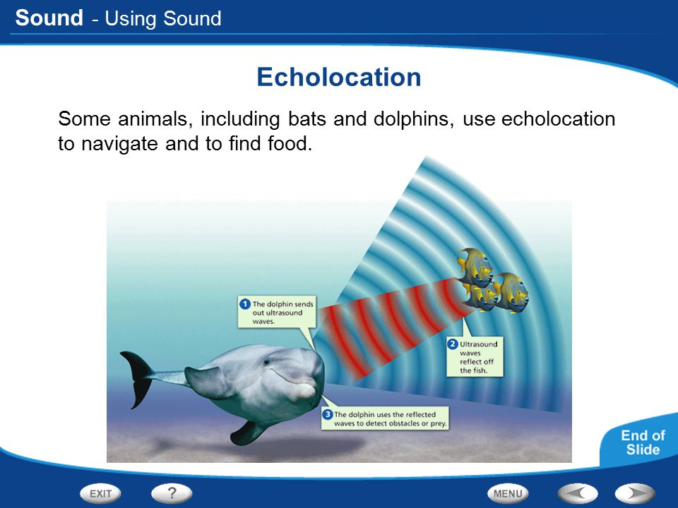 Echolocation - Using Sound