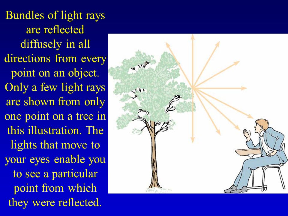 Bundles of light rays are reflected diffusely in all directions from every point on an object.