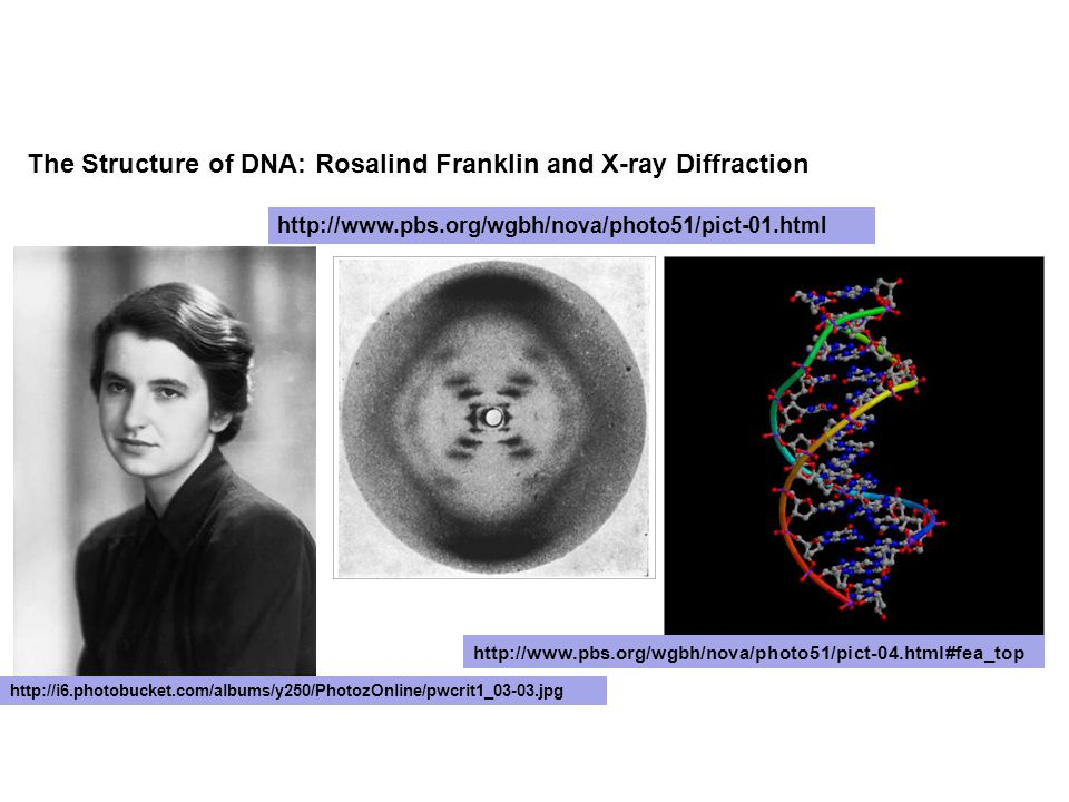 The Structure of DNA: Rosalind Franklin and X-ray Diffraction