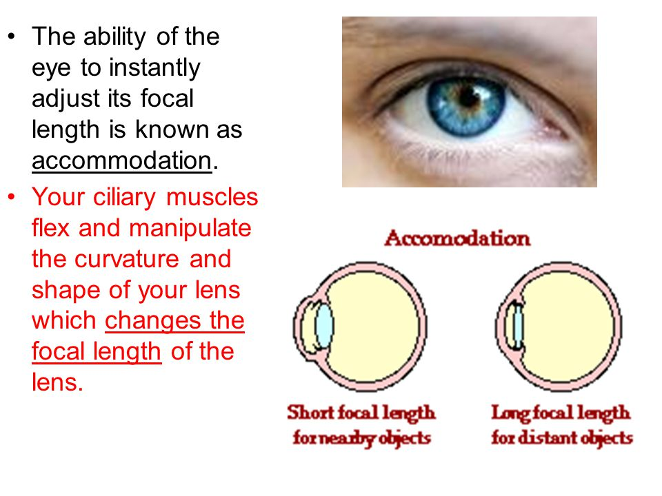 James Clerk Maxwell Ppt Video Online Download - How focal lengths can change the shape of your face
