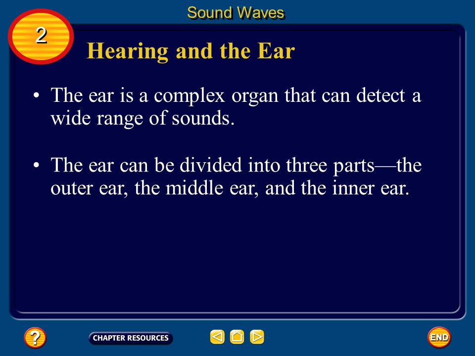 Sound Waves 2. Hearing and the Ear. The ear is a complex organ that can detect a wide range of sounds.