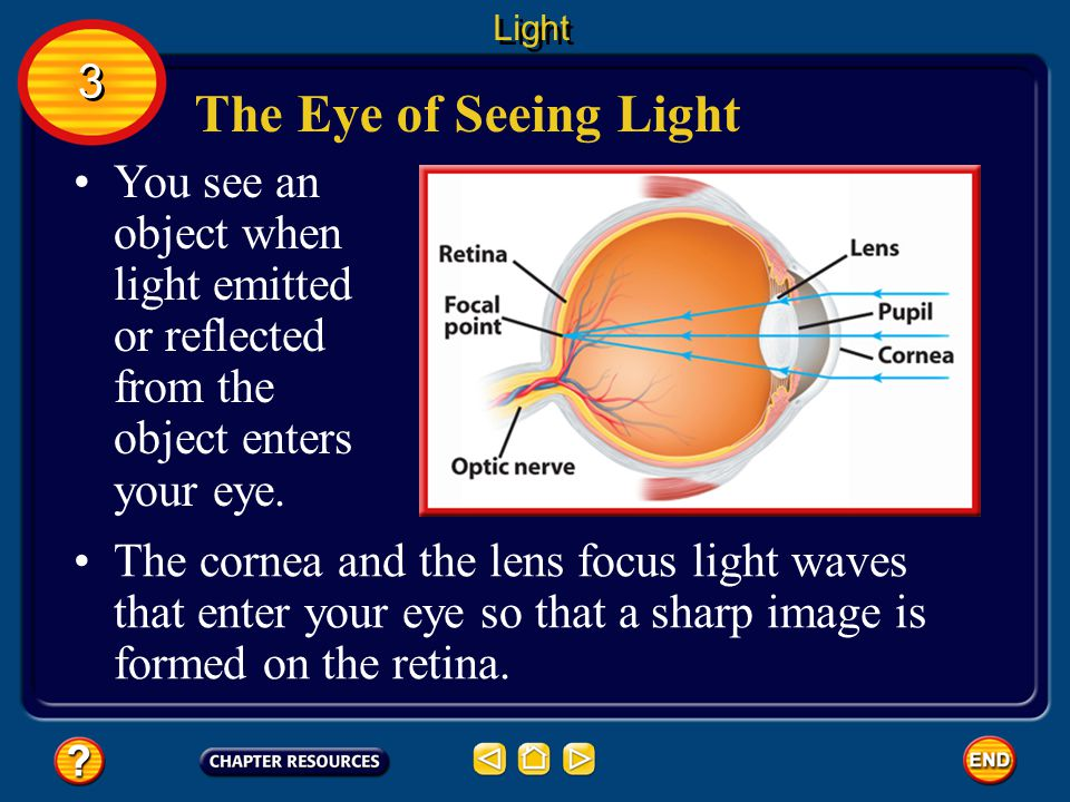 Light 3. The Eye of Seeing Light. You see an object when light emitted or reflected from the object enters your eye.