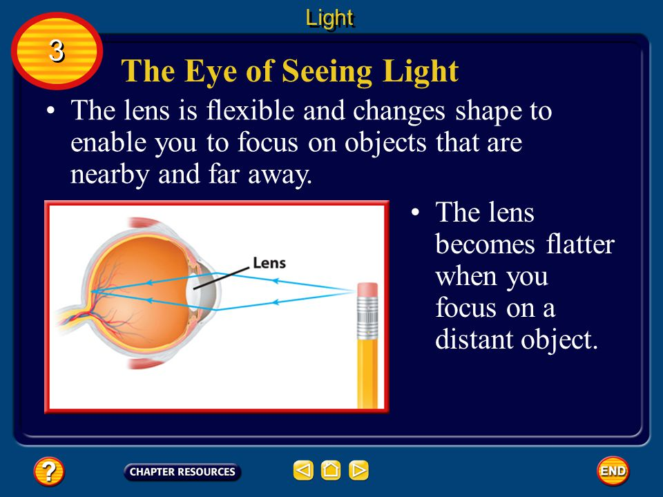 Light 3. The Eye of Seeing Light. The lens is flexible and changes shape to enable you to focus on objects that are nearby and far away.