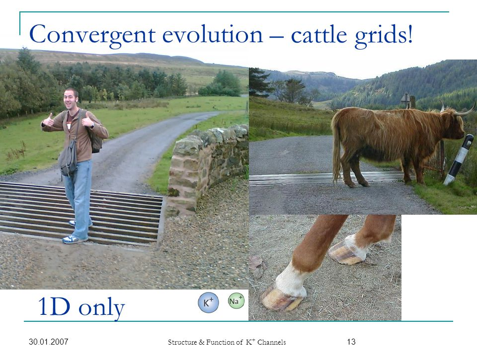 Convergent evolution – cattle grids! 1D only