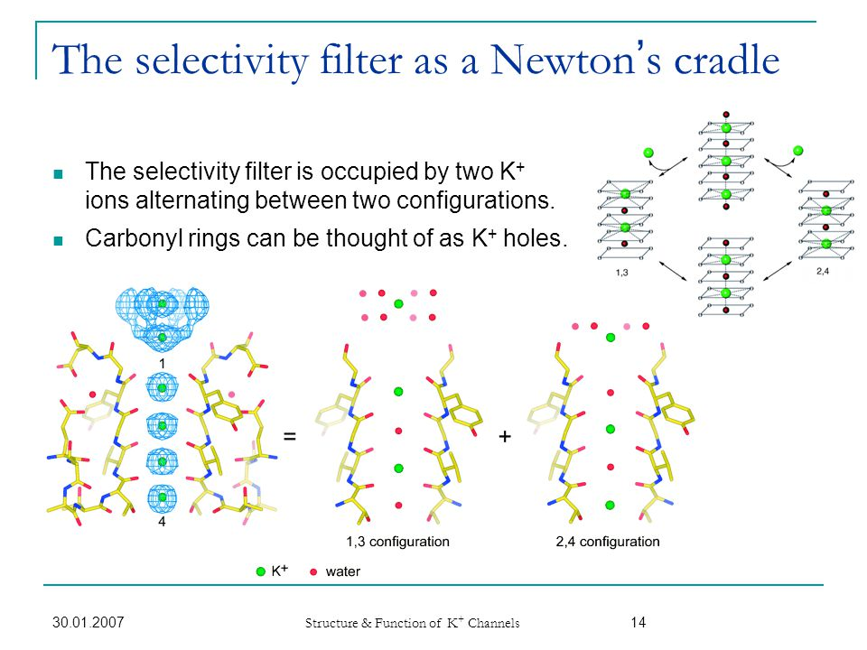 The selectivity filter as a Newton's cradle