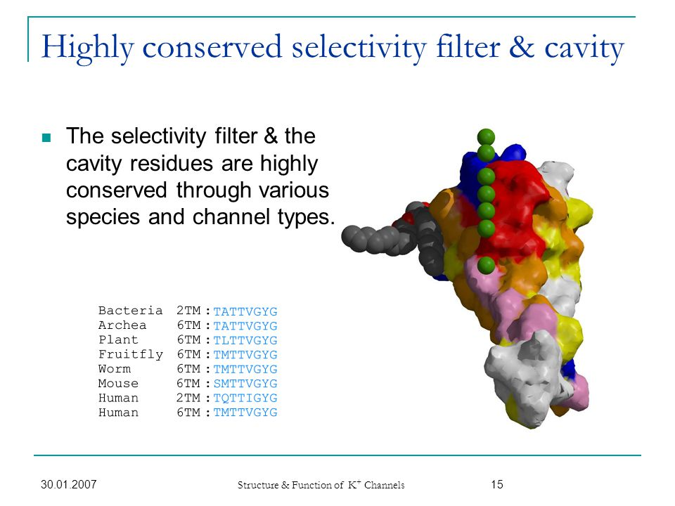 Highly conserved selectivity filter & cavity