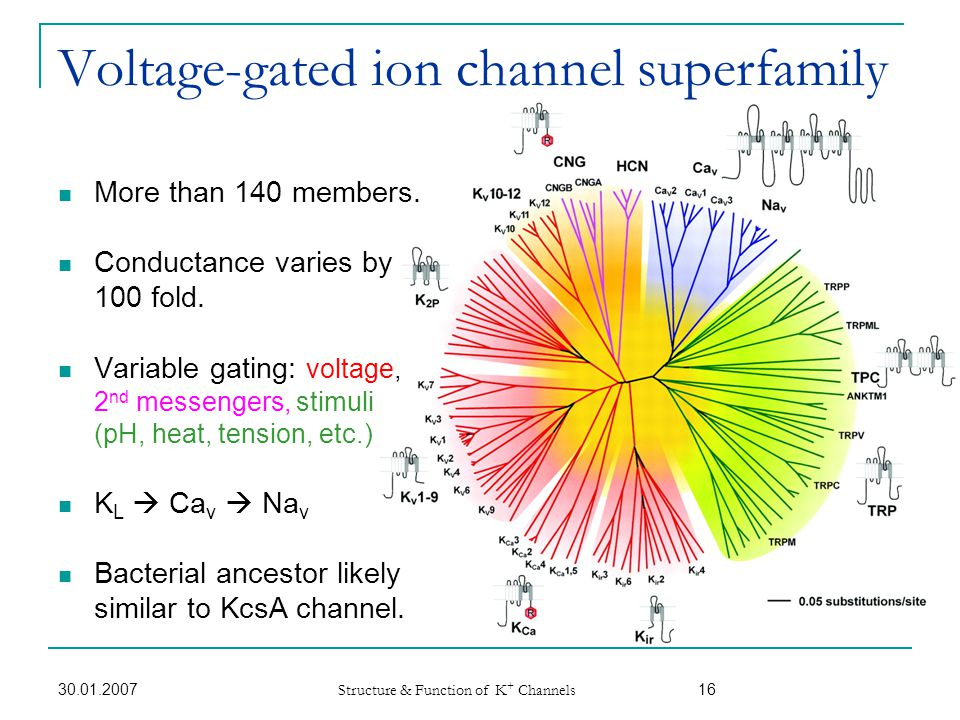 Voltage-gated ion channel superfamily