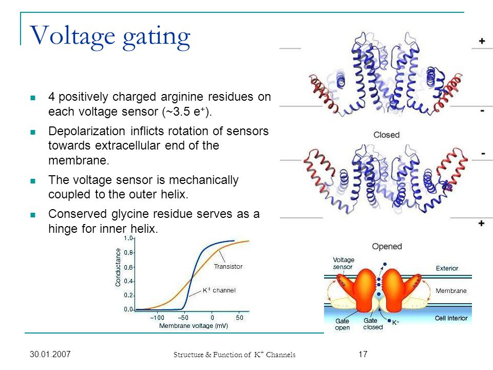 Voltage gating 4 positively charged arginine residues on each voltage sensor (~3.5 e+).