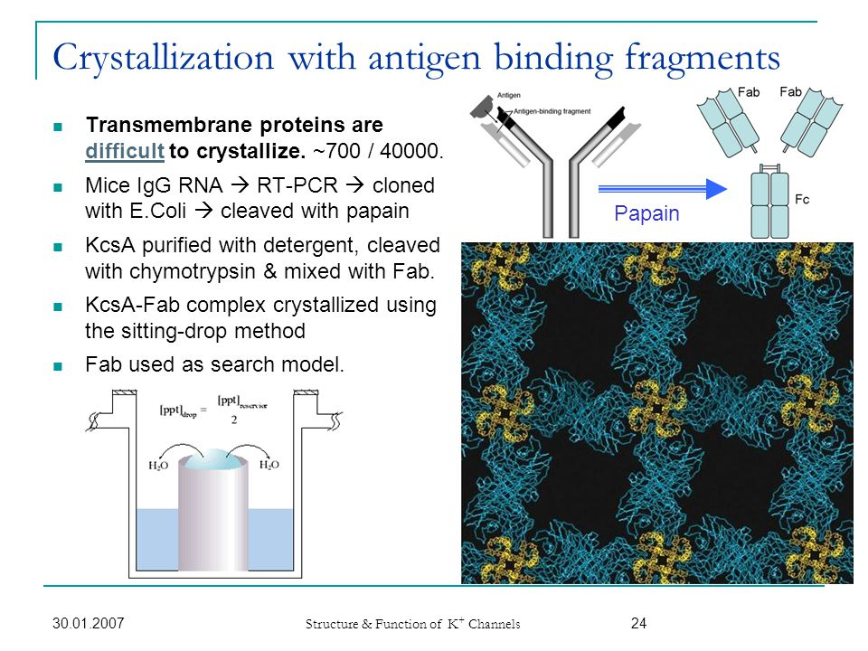 Crystallization with antigen binding fragments