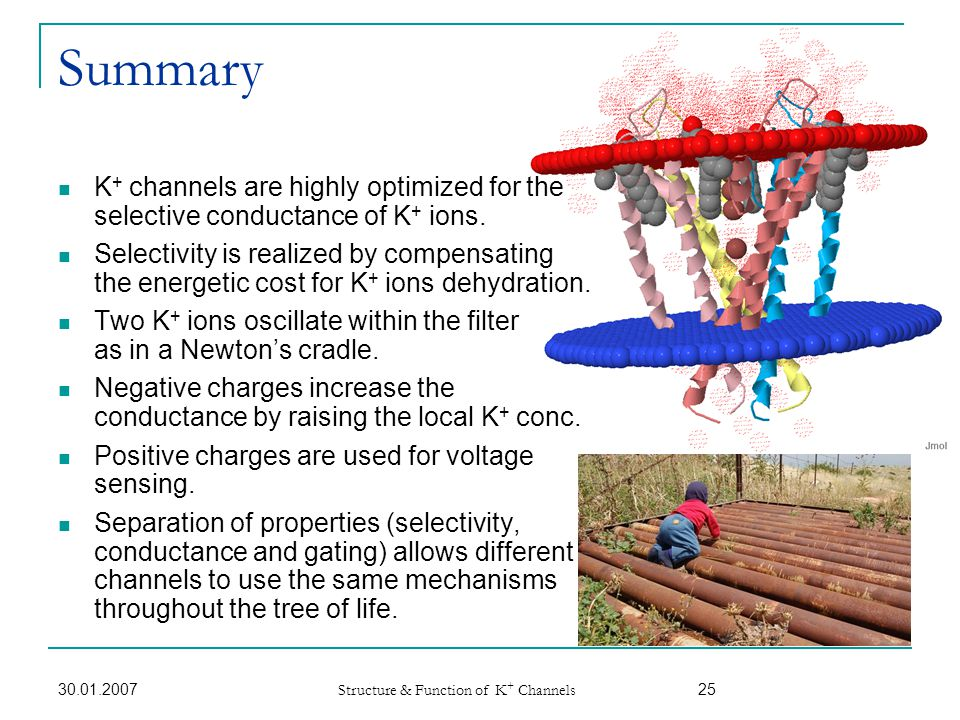 Summary K+ channels are highly optimized for the selective conductance of K+ ions.