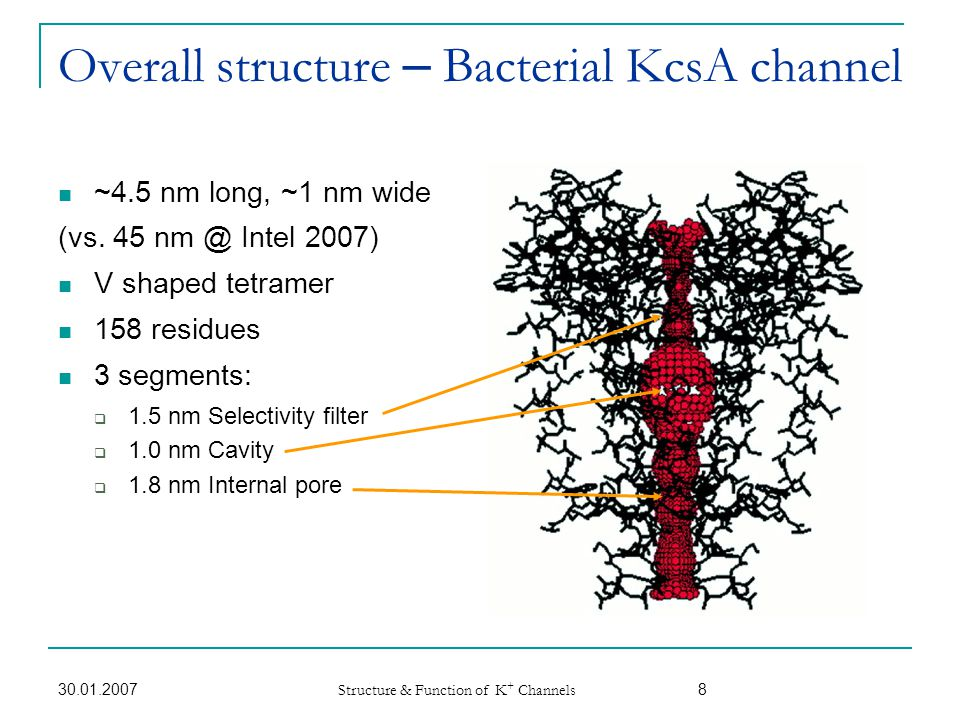 Overall structure – Bacterial KcsA channel