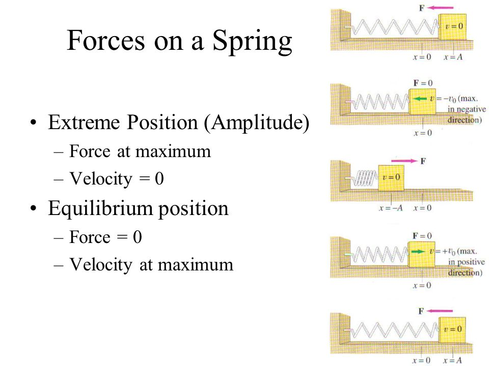 Forces on a Spring Extreme Position (Amplitude) Equilibrium position