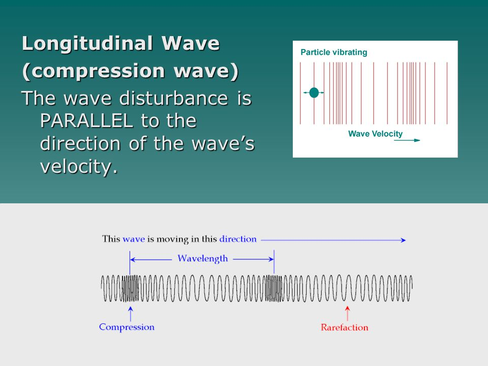 Longitudinal Wave (compression wave) The wave disturbance is PARALLEL to the direction of the wave's velocity.