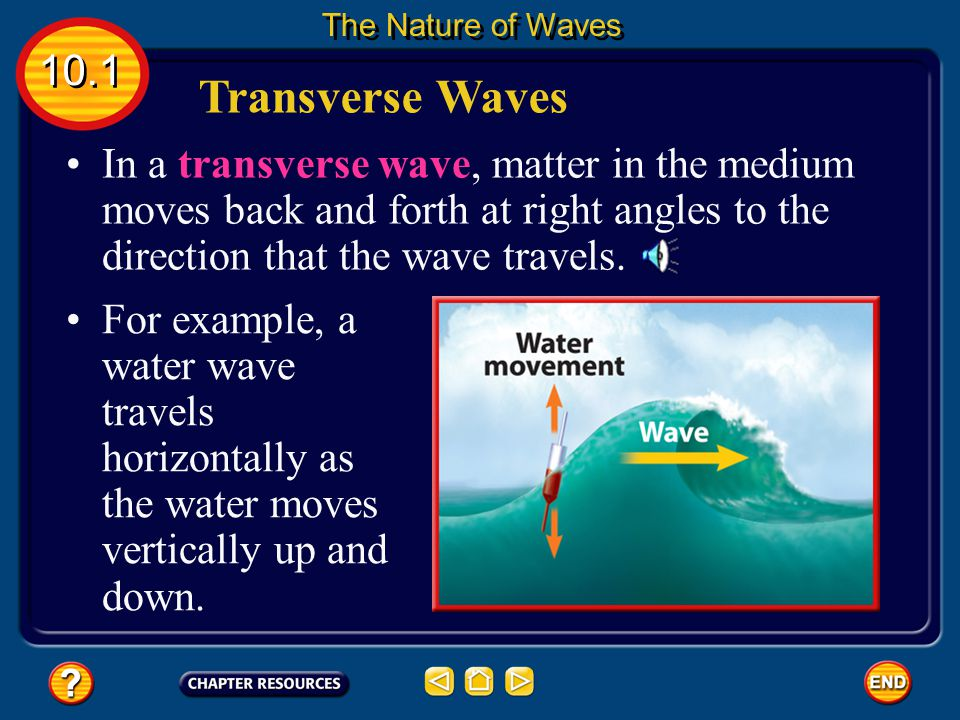 The Nature of Waves 10.1. Transverse Waves.
