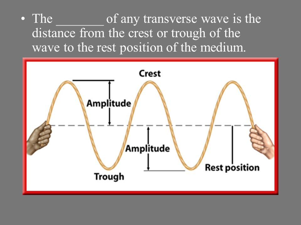 The _______ of any transverse wave is the distance from the crest or trough of the wave to the rest position of the medium.