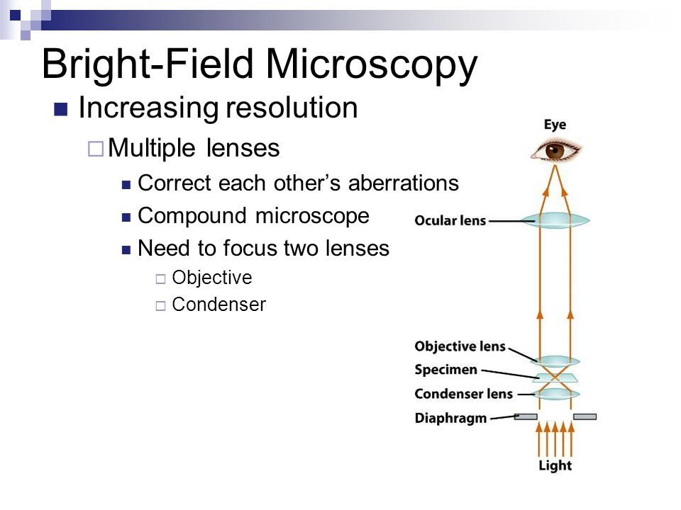 Observing the microbial cell ppt video online download 10 bright field microscopy ccuart Images