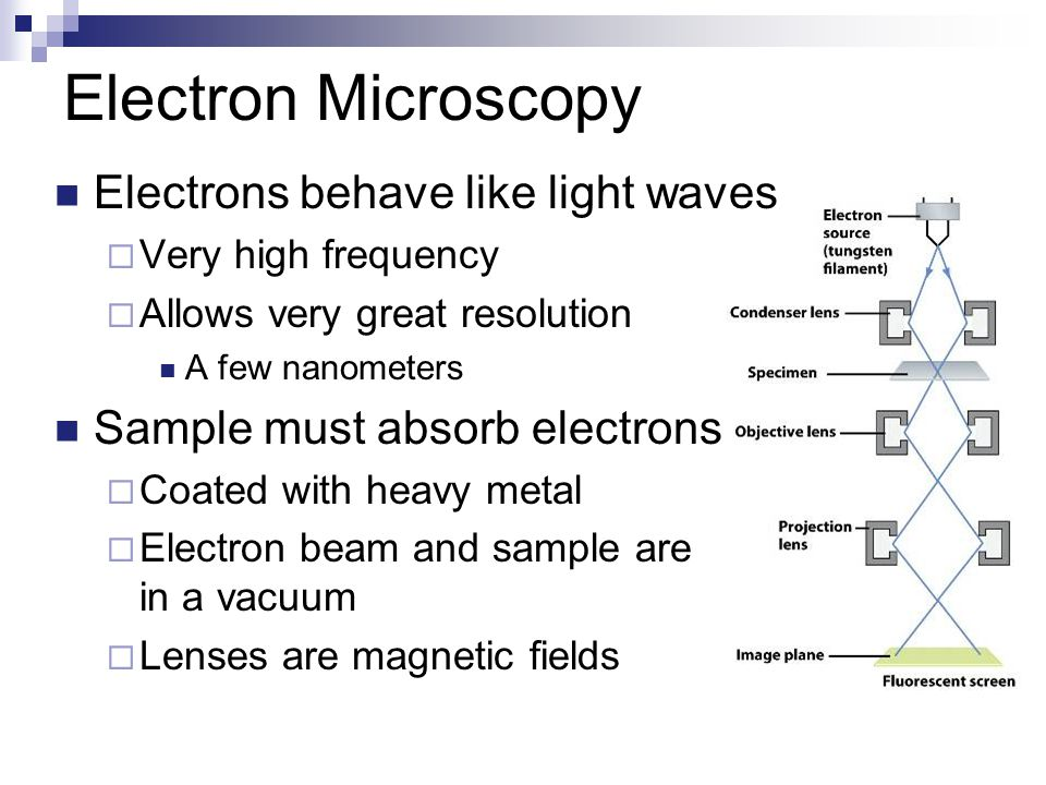 Electron Microscopy Electrons behave like light waves