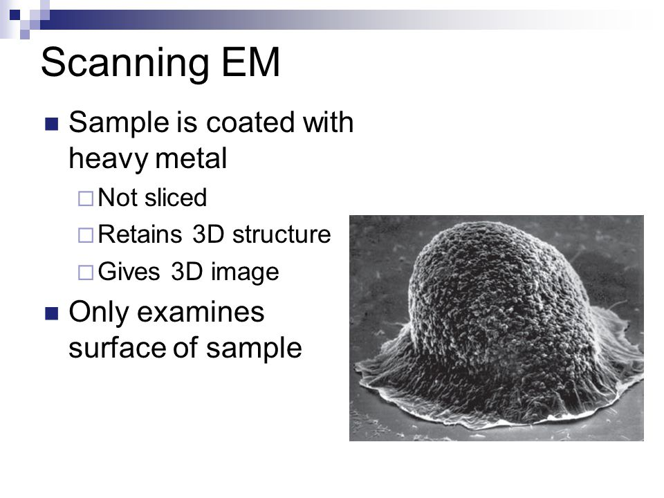 Scanning EM Sample is coated with heavy metal