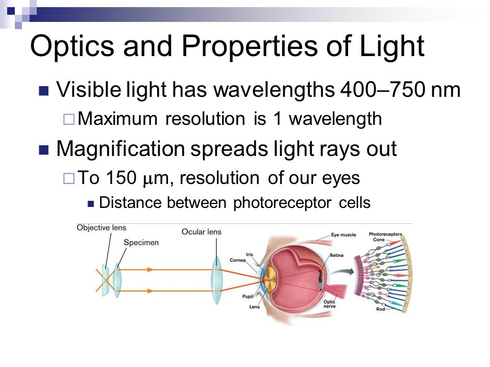 Optics and Properties of Light