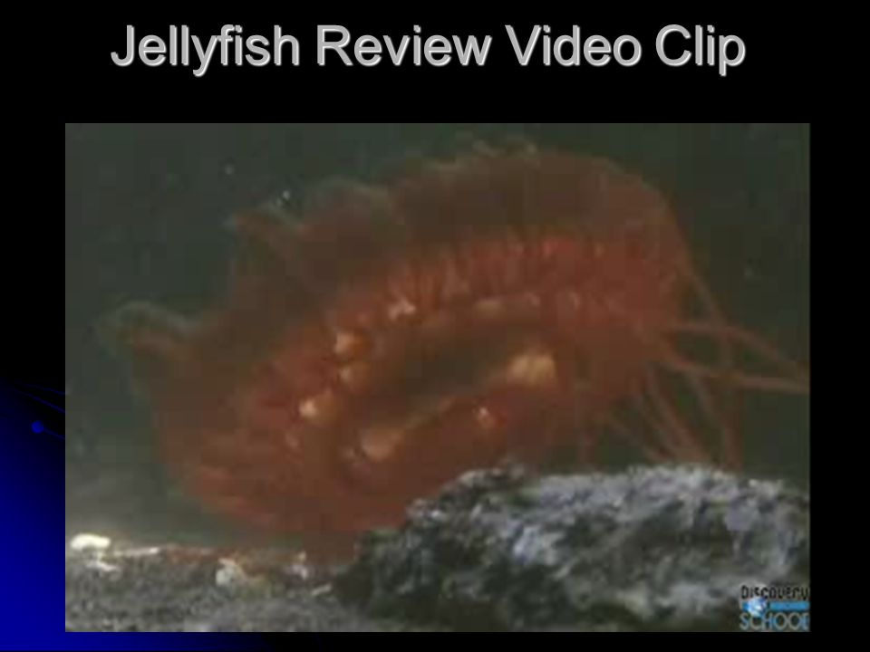 Jellyfish Review Video Clip