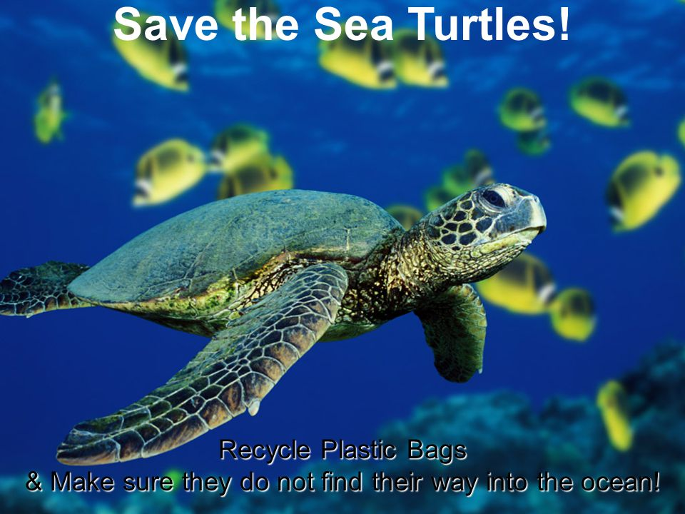 Save the Sea Turtles! Recycle Plastic Bags & Make sure they do not find their way into the ocean!