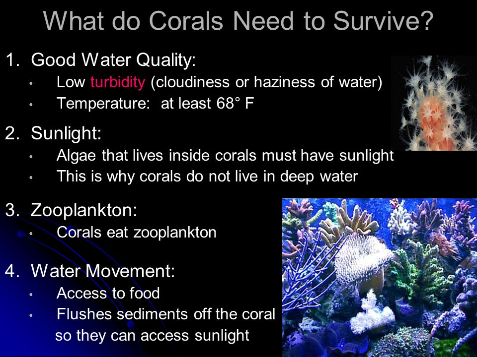What do Corals Need to Survive