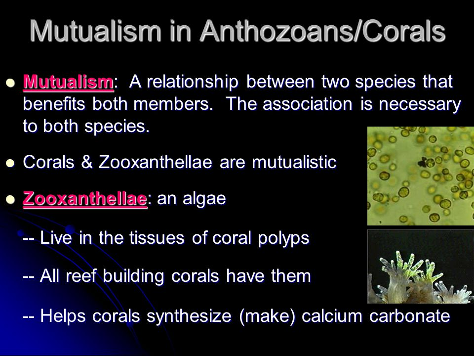 Mutualism in Anthozoans/Corals