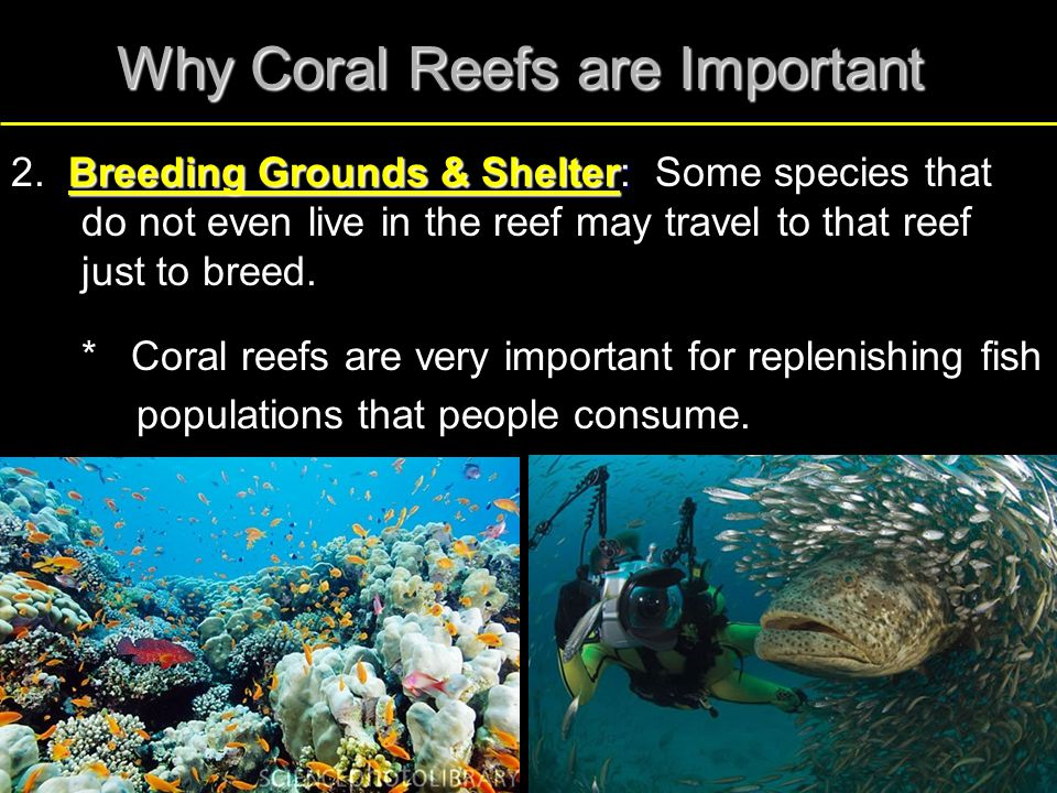 Why Coral Reefs are Important