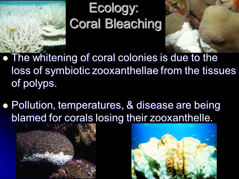 Ecology: Coral Bleaching