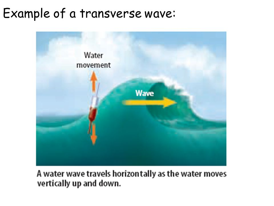 Example of a transverse wave: