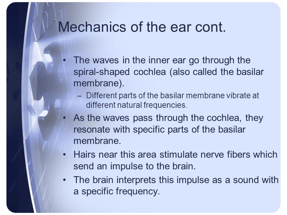 Mechanics of the ear cont.