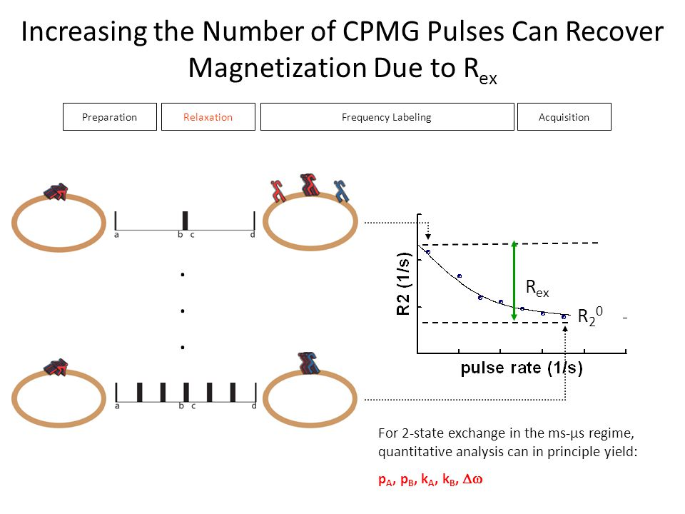 Increasing the Number of CPMG Pulses Can Recover Magnetization Due to Rex