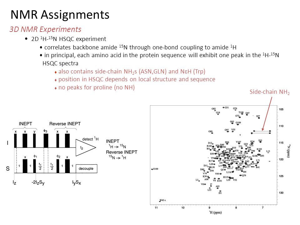 NMR Assignments 3D NMR Experiments 2D 1H-15N HSQC experiment