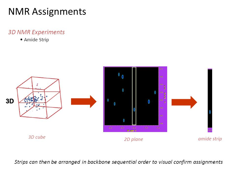 NMR Assignments 3D NMR Experiments Amide Strip